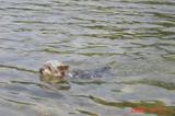見事に泳いでいます